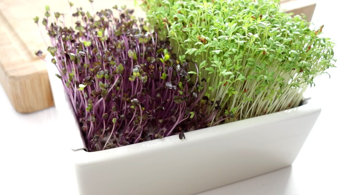 DSC01299 1140x660 - Microgreens selber anbauen und Superfood einfach züchten