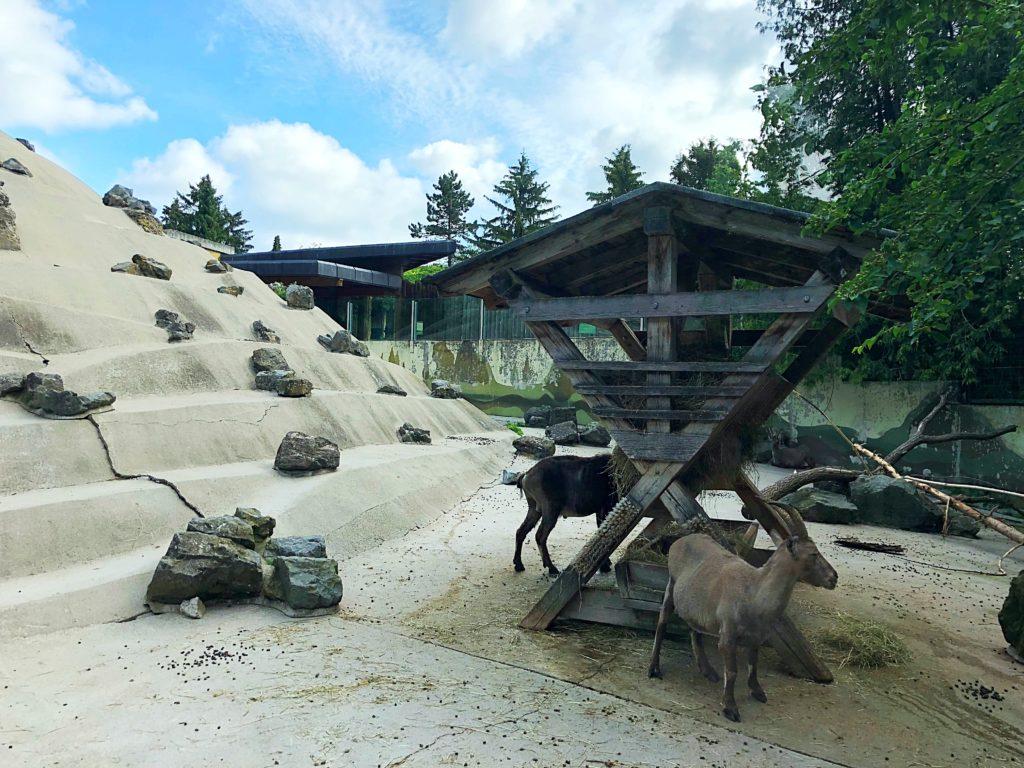 Foto 02.06.18 09 17 28 1 1024x768 - Ausflugstipp Augsburg: Augsburger Zoo