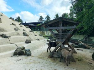 Foto 02.06.18 09 17 28 1 300x225 - Augsburger Zoo