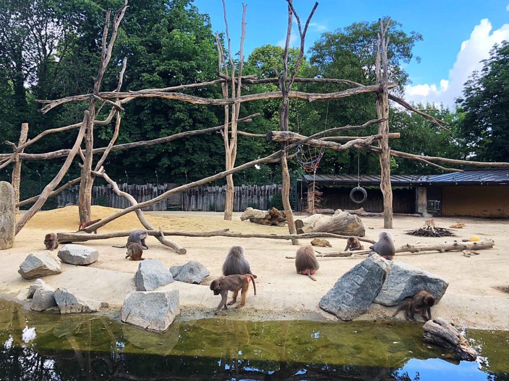 Foto 02.06.18 10 54 52 1024x768 - Ausflugstipp Augsburg: Augsburger Zoo