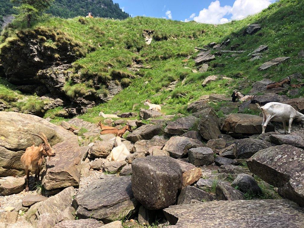 Foto 21.06.18 14 09 19 - Ausflugstipp Verzasca Tal: Wasserfall Froda in Sonogno