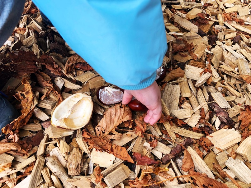 Foto 02.10.18 16 15 31 - 10 Dinge, die ihr im Herbst mit eurem Kind unternehmen könnt