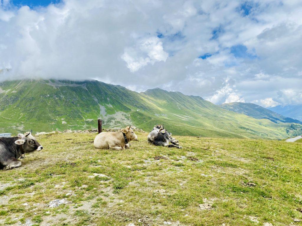 Ausfluege Serfaus Fiss Ladis 15 1024x768 - Familienurlaub in Ladis - Ausflugtipps im Sommer für Serfaus-Fiss-Ladis