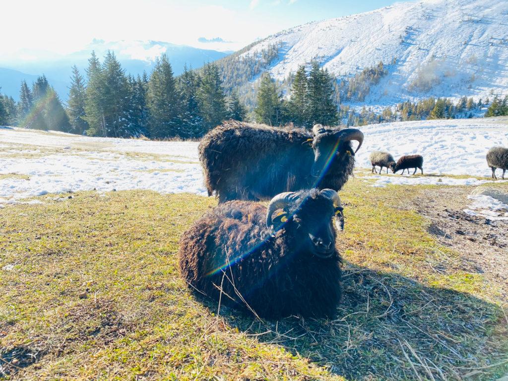 Family Home Alpenhof Meransen 85 1024x768 - Ausflugtipps Gitschberg Jochtal in Südtirol für Familien
