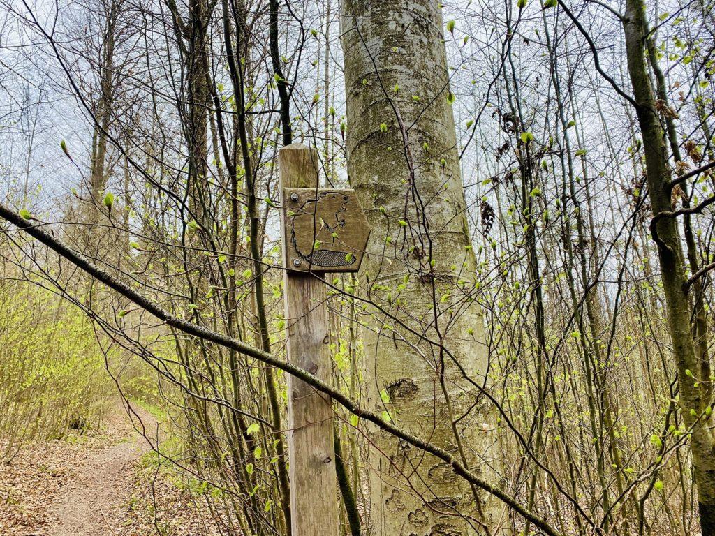 Walderlebnispfad Oberschoenefeld 6 1024x768 - Walderlebnispfad Oberschönenfeld - Ausflugstipp Augsburg