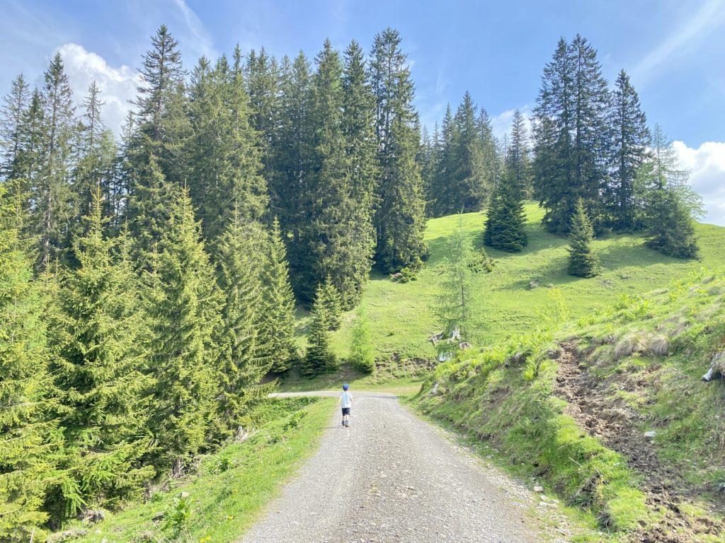 Alpentiere Rundwanderweg Karwendel 5 1024x768 - Ausflugstipp Achensee: Alpentiere Rundwanderweg ab Bergstation Karwendelbergbahn