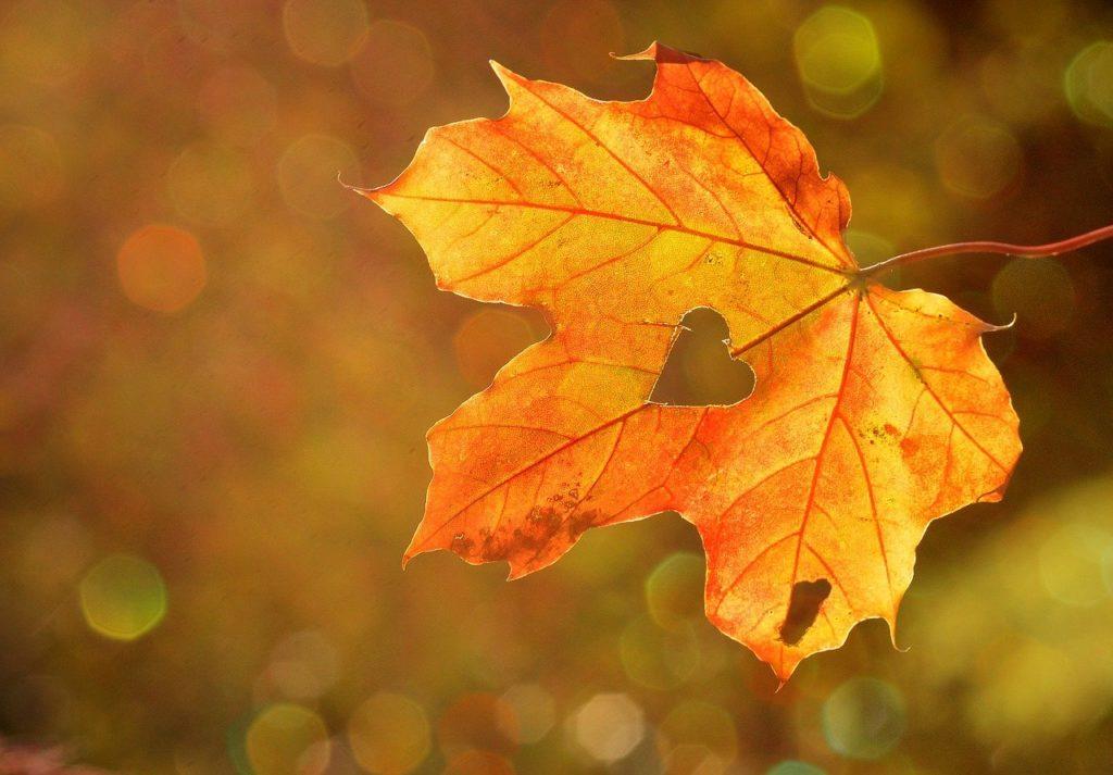 Ideen Herbst 1 1024x713 - Ideen Herbst. 50 Dinge die du im Herbst tun solltest.