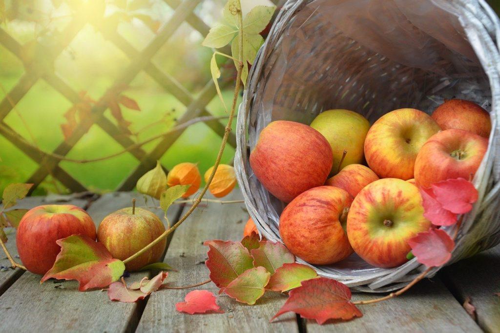 Ideen Herbst 3 1024x683 - Ideen Herbst. 50 Dinge die du im Herbst tun solltest.